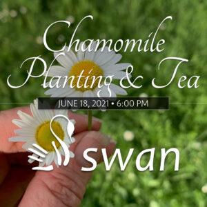 Chamomile Planting & Tea •June 18th, 2021
