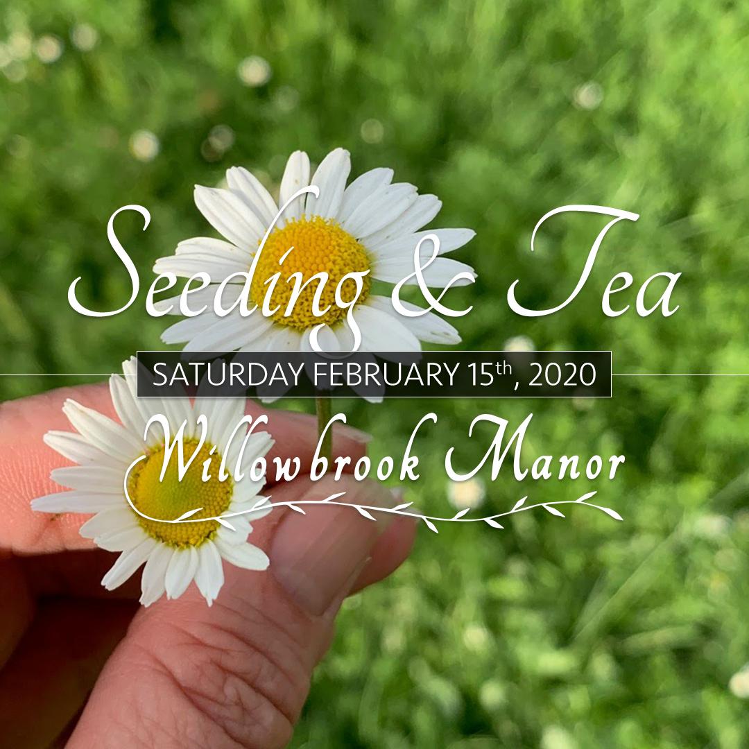 Seeding & Tea